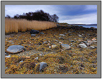 A 7612 Reeds Rocks and Seaweed Ardnaw Knapdale