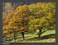 O126631 Three Oaks-Patterdale