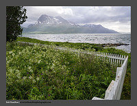 O121378 Fence fjord and mountain Straumsgarden