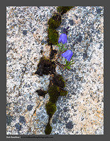 O122035 Senja wild flowers moss and granite Bovaer