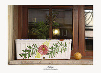 Palma-window box