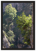46E5469 Trees and cliffs-Cares Gorge
