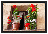 46E6738 Window and flowers-Potes