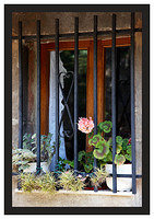 46E6754 Flowers behind bars-Potes