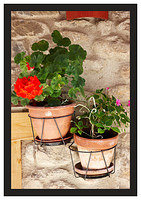 46E6761 Hanging baskets-Potes