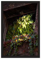 46E6885 Tree through window-Potes