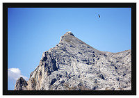 46E6559 A Griffon Vulture soars high over Pico San Carlos
