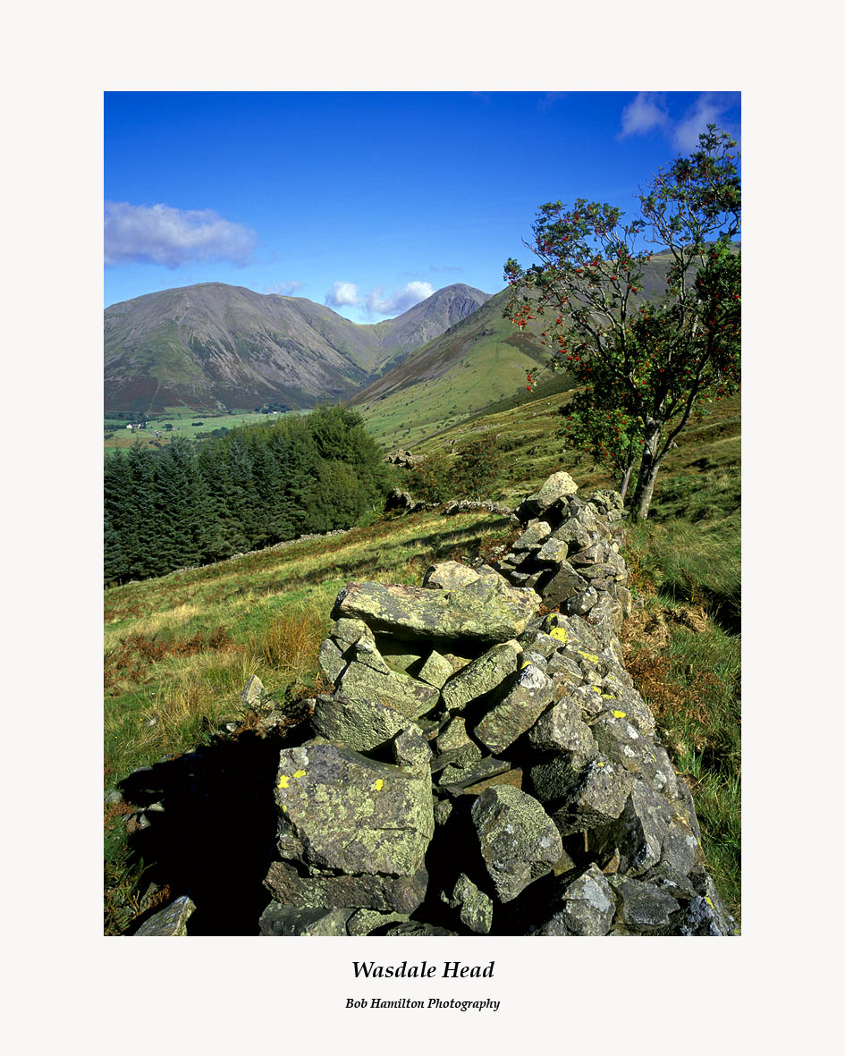 Wasdale Head Dry Stone Dyke and Mountain Ash from Straighthead Gill