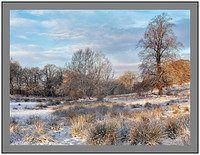 A 4514232 Winter trees-Clyde Valley