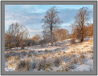 A 4514233 Winter trees-Clyde Valley