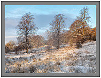 A 4514238 Winter trees-Clyde Valley