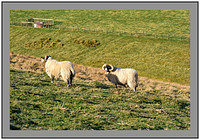 S2016402 A couple of locals-handsome Tups