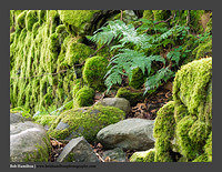 O125437 Fern Moss and Rocks-Balquhidder